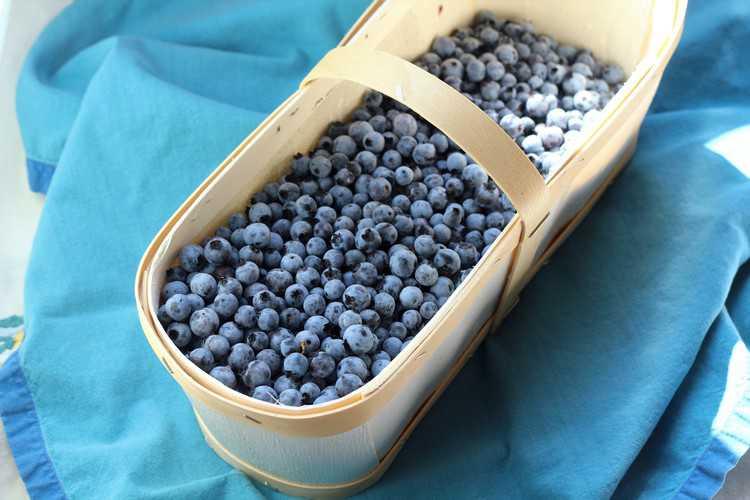 Blueberry Granita