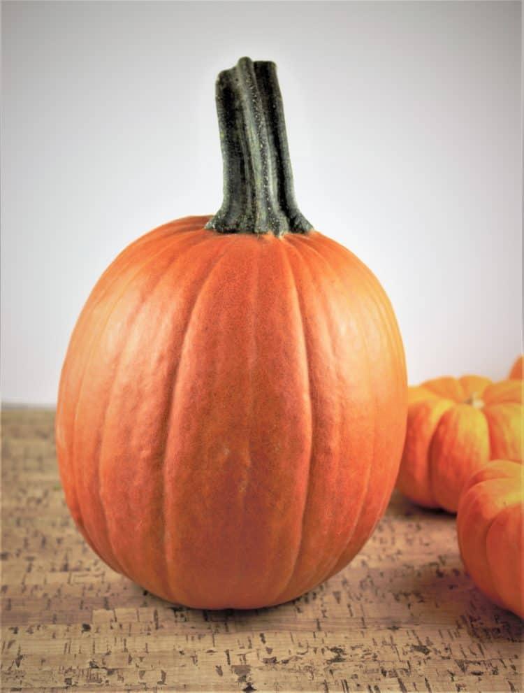 sugar pumpkin with mini pumpkins behind it